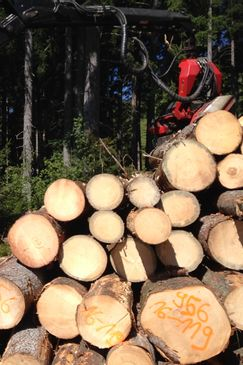 Die Abholzer
