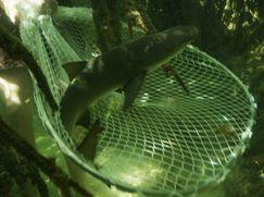 Shark Week 2017 Shark Week 2017 Staffel 1 Folge 9: Hai Society - Das Sozialverhalten der Raubfische