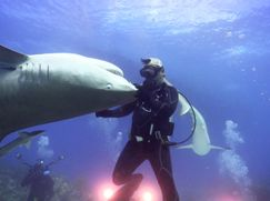 Shark Week 2018 Shark Week 2018 Staffel 1 Folge 5: Ein Jahr voller Hai-lights