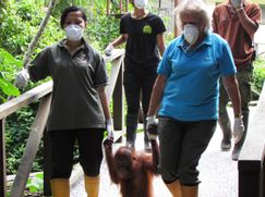 Ein Waisenhaus für Orang-Utans Ein Waisenhaus für Orang-Utans Staffel 1 Folge 5: Von Neuanfängen und zweiten Chancen