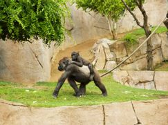 San Diego Zoo San Diego Zoo Staffel 1 Folge 1: Aus dem Ei geschlüpft
