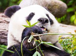 San Diego Zoo San Diego Zoo Staffel 1 Folge 5: Zurück nach China