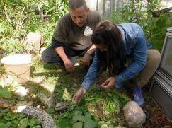 Anna und die Haustiere Staffel 01 Folge 3: Schildkröte